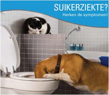 Thema november: diabetes bij de hond en kat