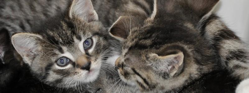 Kitten - De Graafschap Dierenartsen